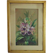 Antique Watercolor Orchids Painting Victorian Floral Flower Bouquet in Frame Signed M. Coghill