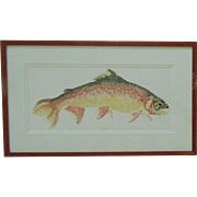 "Vintage Fish Lithograph ""Rainbow"" Trout Signed & Numbered 216/300 Fishing Litho Print"