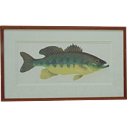 "Vintage Fish Lithograph ""Just An Ol' Big Mouth Bass"" Signed & Numbered 181/300 Fishing Litho Print"