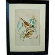 Vintage Watercolor Painting of Full Size Connecticut Warbler Birds Framed by Dorothy Griffith