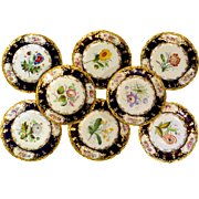 Set/8 Ca.1850 Coalport Cobalt & Gold Botanical Plates Outstanding Quality