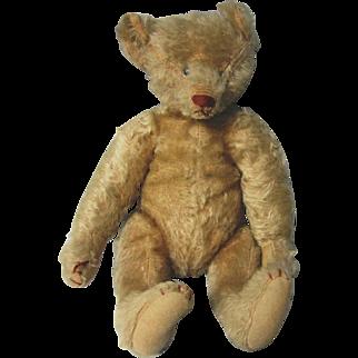"Antique Mohair Bear, Ideal, 1907, 13"" tall, Nice condition"