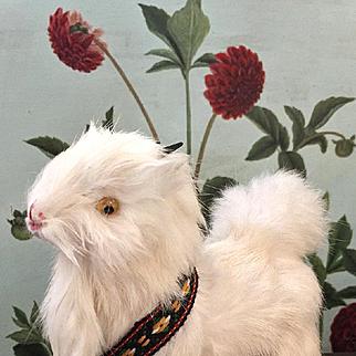 Wonderful Little Goat