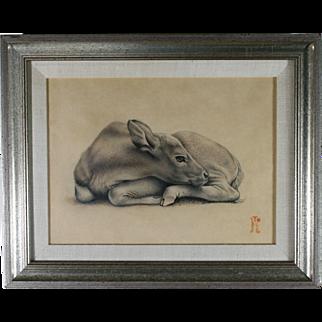 Carolyn Moorehead Edmundson Pencil Graphite Drawing ''Young Banteng'' Calf Java Bali