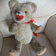 Bears zooty german