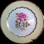 Prettiest PorcelainTuscan Pattern Bread & Butter Plate by Dovedale