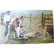 "Early 20th Century Postcard ""Branding Time On The Ranch""‏"
