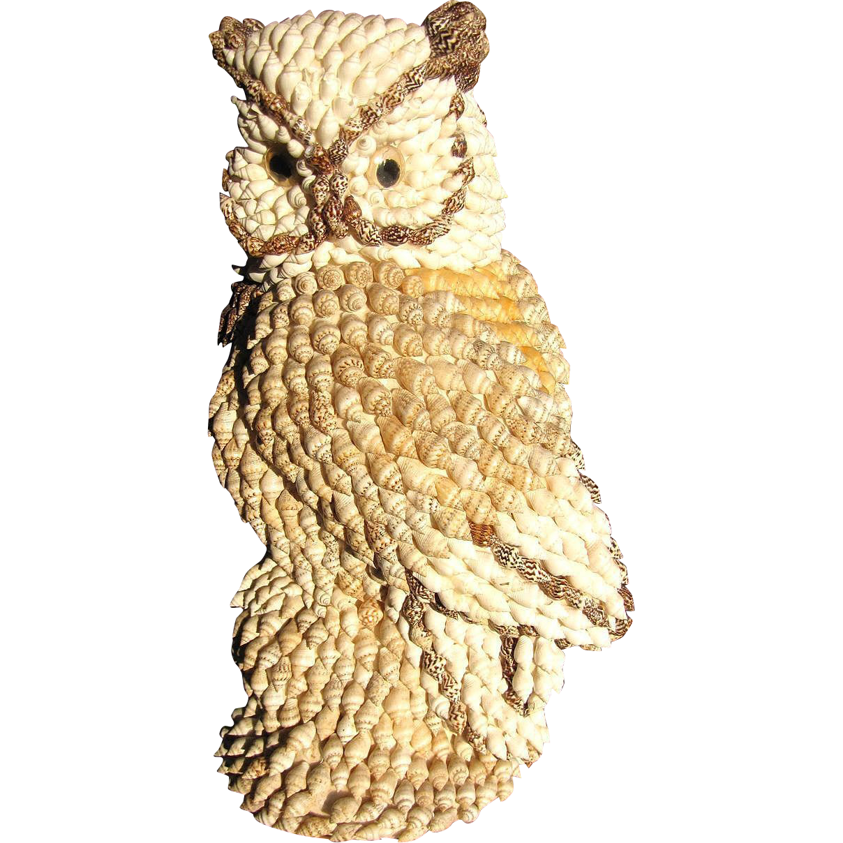 Beach house perfect 11 sea shell art vintage owl for What are shells made of