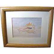 Limited Edition Sea Shell Print by Margo Hammond, Signed & Numbered