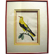 "Shaw & Nodder circa 1796 Antique Hand Colored Copper Plate # 285 from ""The Naturalist's Miscellany"", Beautifully Framed"