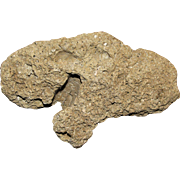 "Fossil Agatized Coral Specimen, Circa 38-25 Million Years Old, 5"" by 3"" by 2"""