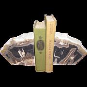 Large Polished Petrified Wood Bookends