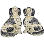 Pair Staffordshire King Charles Spaniels Dogs