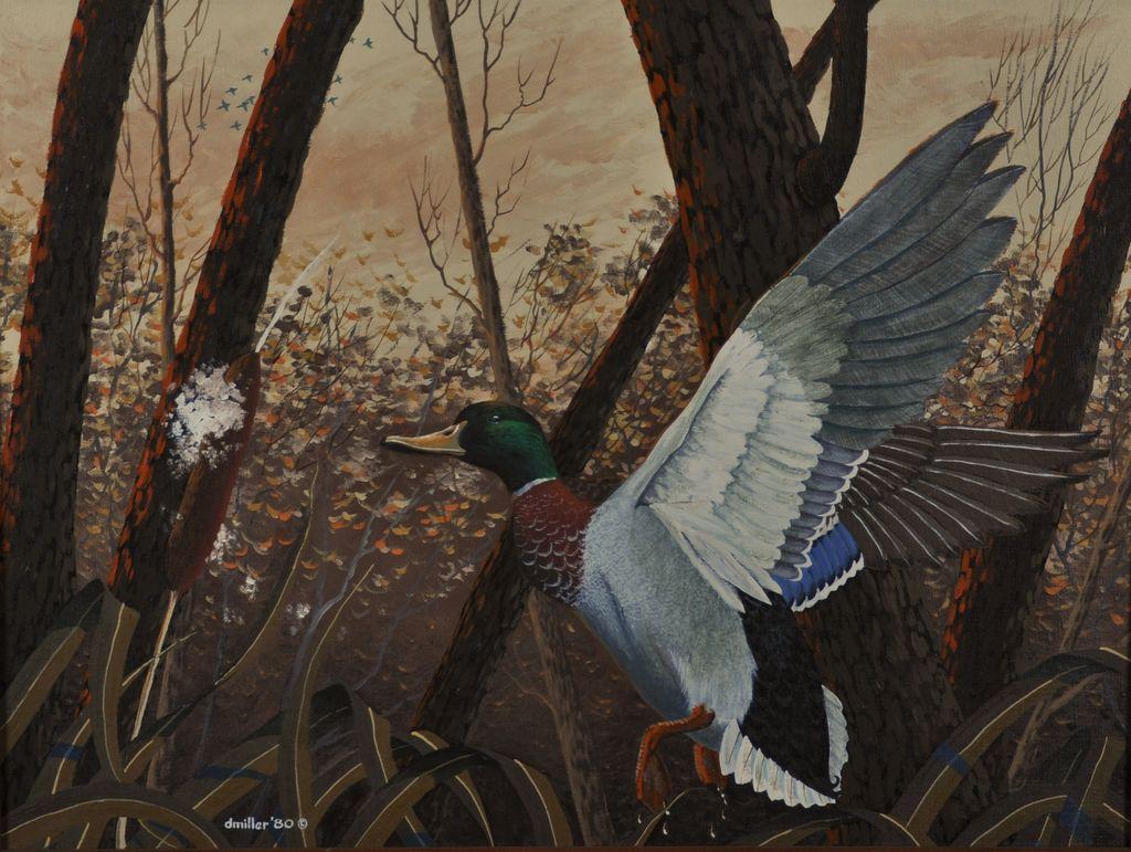 Mallard Drake Landing Original Oil Painting by Daryl Miller