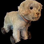 Early Dog on Metal Wheels