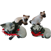 Siamese and Himalayan Cats Enesco Taiwan China