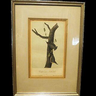 "John James Audubon First edition California nuthatch  Royal octavo  6 1/2 x 10 1/4"" Lithograph c1840"