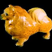 Mortens Studio  Pomeranian