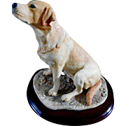 Yellow Labrador by Border Fine Arts Scotland
