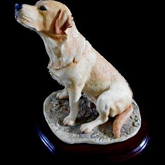 Yellow Labrador by Border Fine Arts Scotland