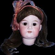 Antique German AM 8 Floradora Bisque Doll Head with Wig