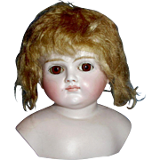 Antique German Bisque Closed Mouth Turned Shoulder Doll Head