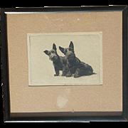 Morgan Dennis (1892 - 1960) American artist original etching print signed of Scottish Terrier dogs
