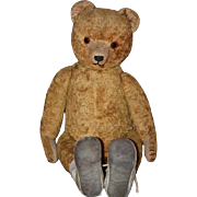 Old Teddy Bear Jointed Mohair Mohair Wonderful Face