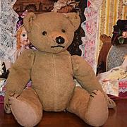 Old Teddy Bear Unusual Button in each Ear Wonderful Jointed Button Eyes Steiff