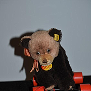 Vintage Steiff Bear on Wheels Rattler w/ Unusual Eyes Pull Toy for Doll