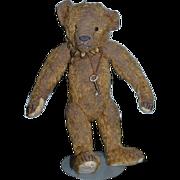Adorable Teddy Bear Artist Bear Beardsley Bear Collectible