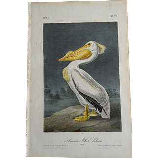 1st Ed. Octavo Pl. 422 American White Pelican by J. J. Audubon
