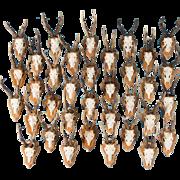 Set of 35 Vintage Black Forest Deer Antler Mounts