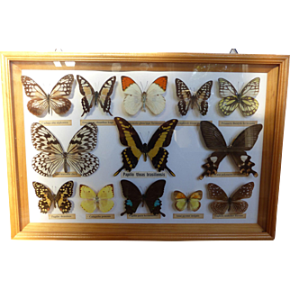 Vintage Framed Natural Butterfly Collection Taxidermy