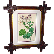 Vintage Adirondack Frame with Vintage Hand Colored Sweet Geraniums Botanical Print by Smith