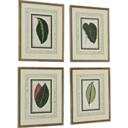 Set of Four Botanical Prints C.1860 French Matting Beautiful Leaved Plants Edward Joseph Lowe