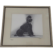 Large Black and White Studio Photograph Standard Poodle Dog by Ralph Morgan and Associates Photography Denver 40's 50's