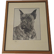 Large Studio Photo Brindle Great Dane C 1940 1950 by Ralph Morgan