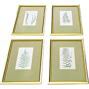 Vintage 1960's Framed Prints of Ferns Gold Frames with Yellow Painted Slip