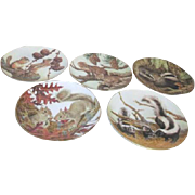 Set of 5 Decorator Plates by Collectors Studio Forest Year Series