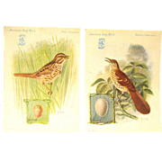 Song Birds Advertise Singer Sewing Machines on 1927 Trade Cards