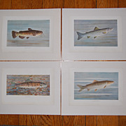 4 WB Gillette Fish Art Prints Trout Salmon Bullhead Chub