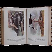 1950 Audubon's Birds of America MacMillan