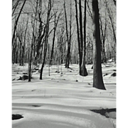 Original 'Winter in the Woods' B/W Art Photograph 8x10
