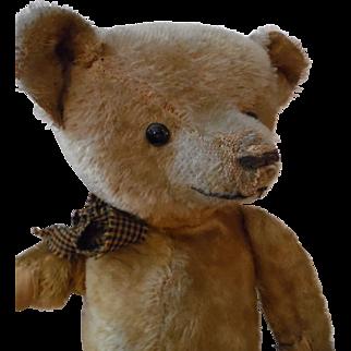 Early (American?) Bear