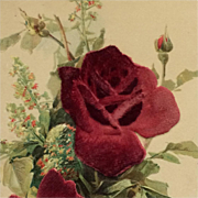 Christmas Roses In Deep Red