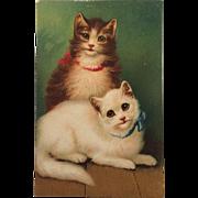 Sweet Kitty Duo