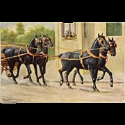 Prancing Horses Postcard