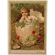Large Trade Card- Nicholl's Compound Syrup Babe In Egg Shell