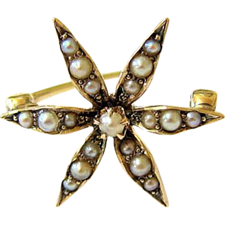 Antique 14 Kt Yellow Gold Seed Pearl Starburst Brooch Pin Hallmarked
